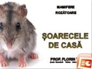 Șoarecele