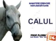 Calul